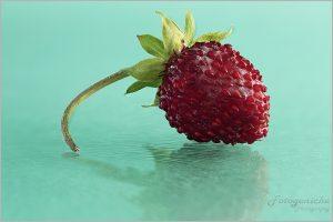 Miniature Strawberry